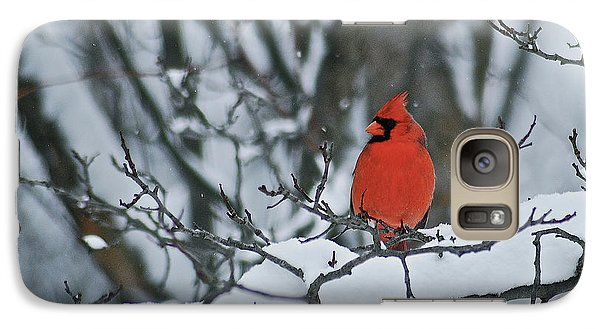 Cardinal And Snow Galaxy Case by Michael Peychich