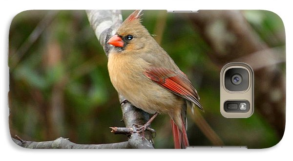 Galaxy Case featuring the photograph Cardinal by Cathy Harper