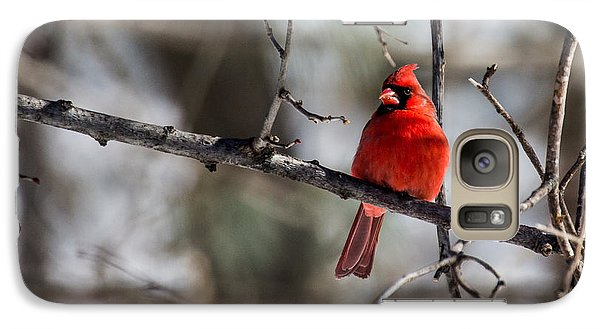Galaxy Case featuring the photograph Cardinal by Dan Traun