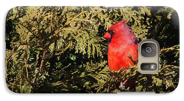 Galaxy Case featuring the photograph Cardinal I by Michelle Wiarda