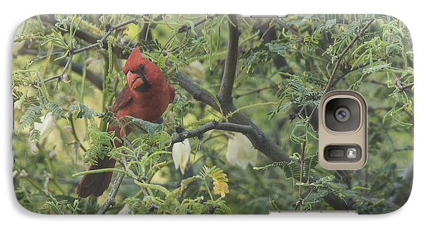 Galaxy Case featuring the photograph Cardinal In Mesquite by Laura Pratt