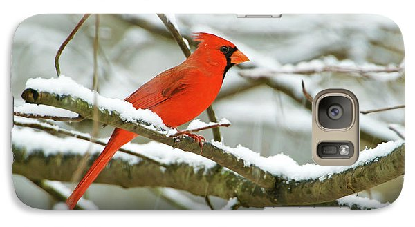 Finch Galaxy S7 Case - Cardinal In Snow by Laura D Young