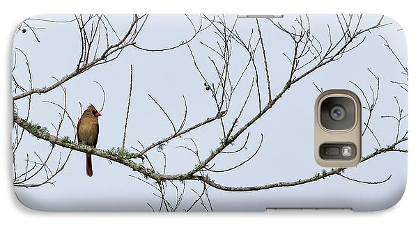 Galaxy Case featuring the photograph Cardinal In Tree by Richard Rizzo