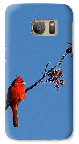 Galaxy Case featuring the photograph Cardinal On A Cherry Branch Dsb033 by Gerry Gantt