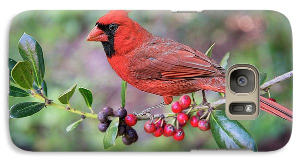 Galaxy Case featuring the photograph Cardinal On Holly Branch by Bonnie Barry
