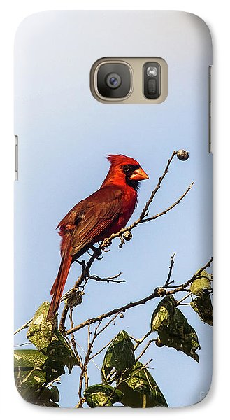 Galaxy Case featuring the photograph Cardinal On Treetop by Robert Frederick