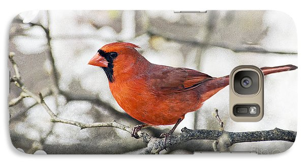 Galaxy Case featuring the photograph Cardinal Spring - D009909-a by Daniel Dempster