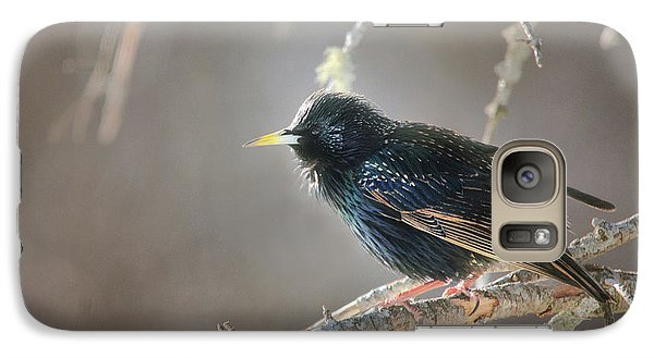Starlings Galaxy S7 Case - Catch The Morning Light by Susan Capuano