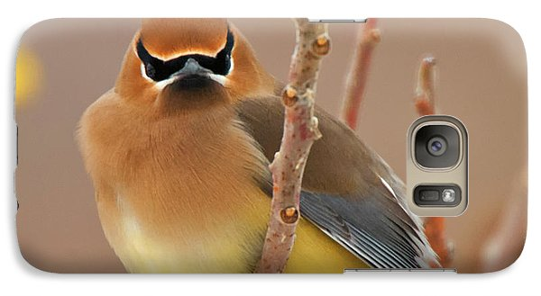 Cedar Wax Wing Galaxy Case by Carl Shaw