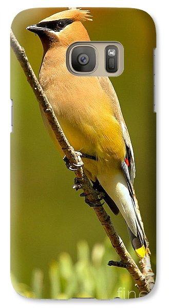 Cedar Waxwing Galaxy Case by Adam Jewell