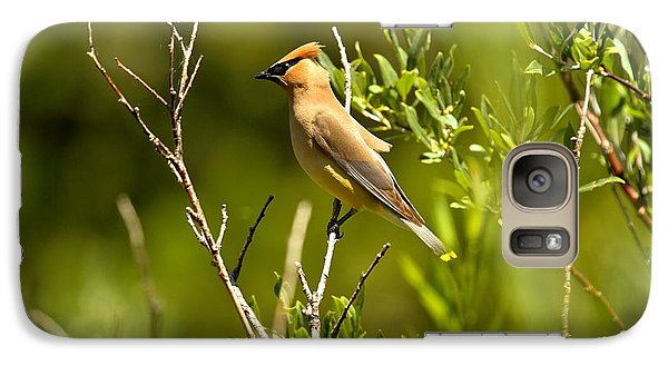 Cedar Waxwing At Glacier Galaxy Case by Adam Jewell