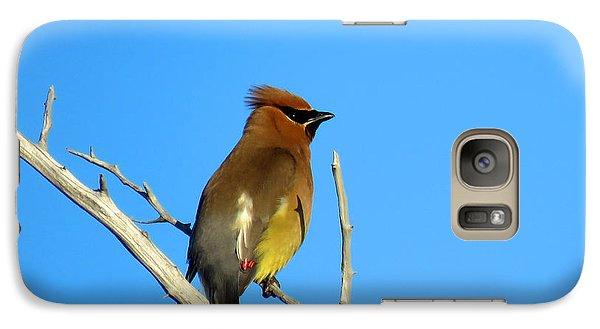 Cedar Waxwing Galaxy S7 Case by Dianne Cowen