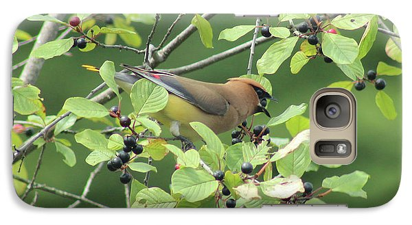 Cedar Waxwing Eating Berries Galaxy S7 Case by Maili Page