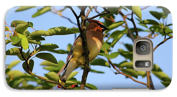 Cedar Waxwing Galaxy Case by Mark A Brown