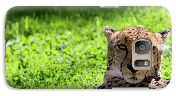 Galaxy Case featuring the photograph Cheetah Face by Rebecca Cozart