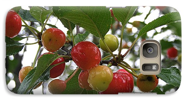 Galaxy Case featuring the photograph Cherries In The Morning Rain by Angie Rea