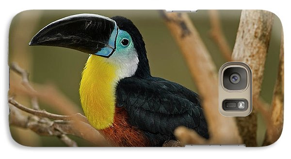 Galaxy Case featuring the photograph Chestnut Mandibled Toucan by JT Lewis