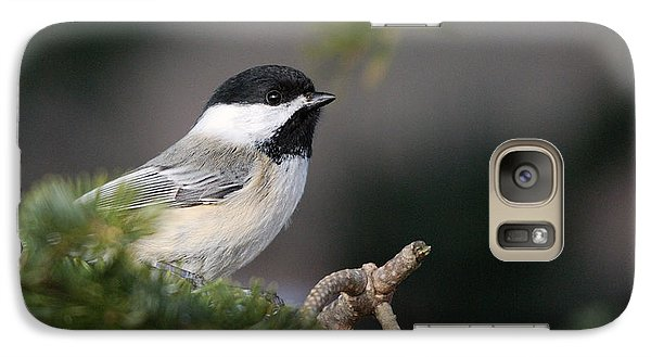 Galaxy Case featuring the photograph Chickadee In Balsam Tree by Susan Capuano