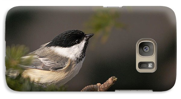 Galaxy Case featuring the photograph Chickadee In The Shadows by Susan Capuano