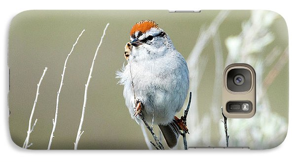 Galaxy Case featuring the photograph Chipping Sparrow by Mike Dawson
