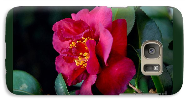 Galaxy Case featuring the photograph Christmas Camellia by Marie Hicks