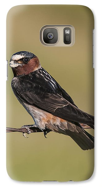 Galaxy Case featuring the photograph Cliff Swallow by Gary Lengyel