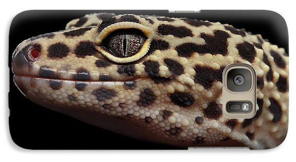 Close-up Leopard Gecko Eublepharis Macularius Isolated On Black Background Galaxy S7 Case by Sergey Taran