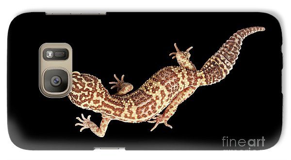 Closeup Leopard Gecko Eublepharis Macularius Isolated On Black Background Galaxy S7 Case by Sergey Taran