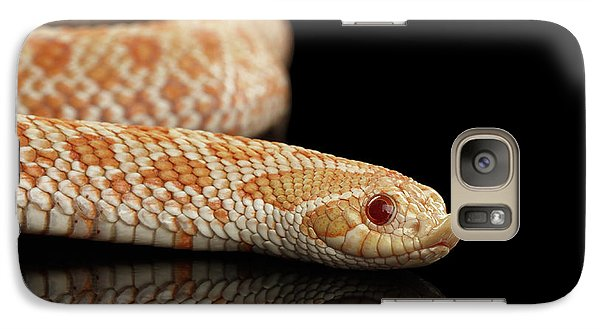 Closeup Pink Pastel Albino Western Hognose Snake, Heterodon Nasicus Isolated On Black Background Galaxy S7 Case by Sergey Taran