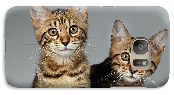 Closeup Portrait Of Two Bengal Kitten On White Background Galaxy Case by Sergey Taran