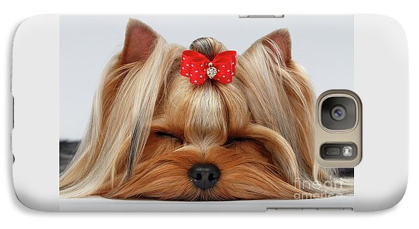 Closeup Yorkshire Terrier Dog With Closed Eyes Lying On White  Galaxy S7 Case by Sergey Taran