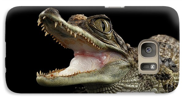Closeup Young Cayman Crocodile, Reptile With Opened Mouth Isolated On Black Background Galaxy S7 Case
