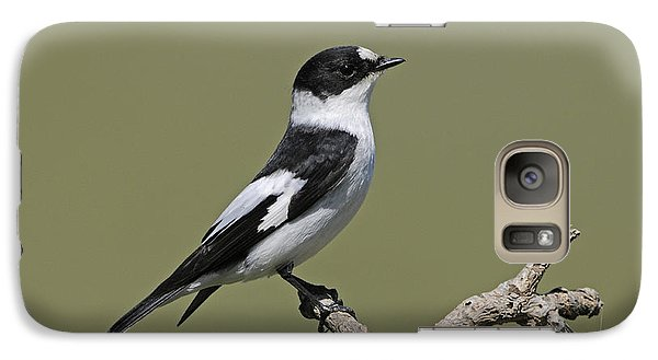 Collared Flycatcher Galaxy S7 Case by Richard Brooks/FLPA