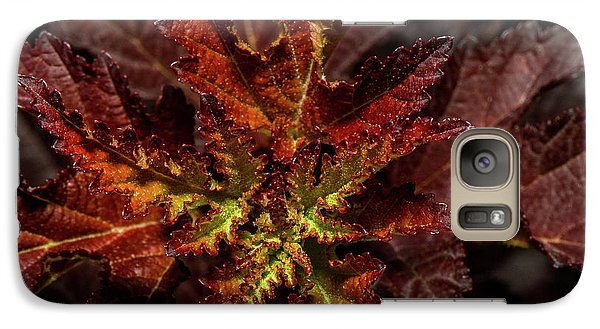 Galaxy Case featuring the photograph Colorful Leaves by Paul Freidlund