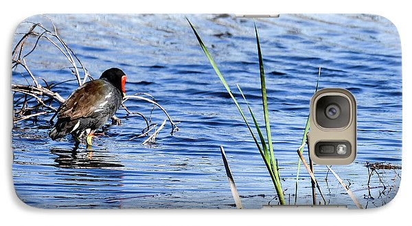 Galaxy Case featuring the photograph Common Gallinule by Gary Wightman