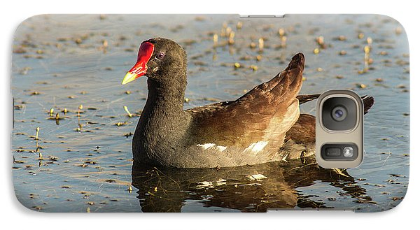 Galaxy Case featuring the photograph Common Gallinule by Robert Frederick
