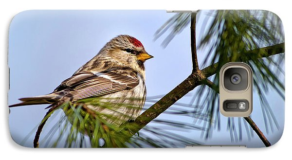 Galaxy S7 Case featuring the photograph Common Redpoll Bird by Christina Rollo