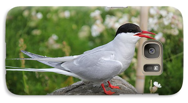 Galaxy Case featuring the photograph Common Tern by David Grant