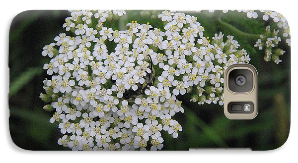 Galaxy Case featuring the photograph Common Yarrow Closeup by Robyn Stacey