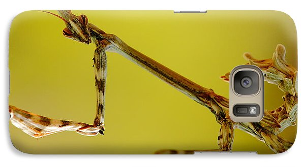 Galaxy Case featuring the photograph Cone Head Mantis by Richard Patmore