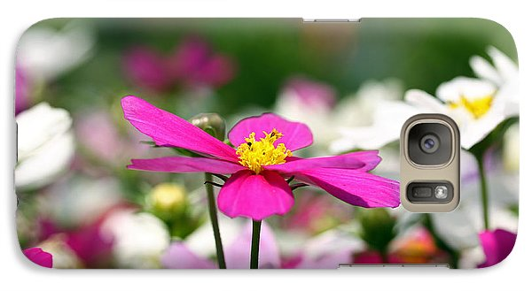 Galaxy Case featuring the photograph Cosmos Flowers by Denise Pohl