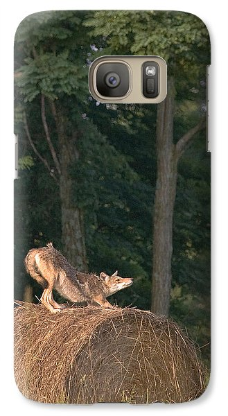 Galaxy Case featuring the photograph Coyote Stretching On Hay Bale by Michael Dougherty