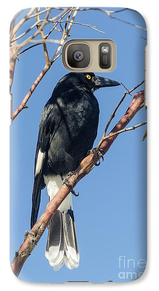 Currawong Galaxy S7 Case by Werner Padarin