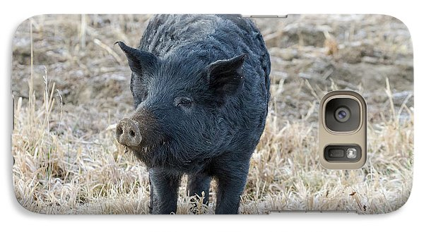 Galaxy Case featuring the photograph Cute Black Pig by James BO Insogna