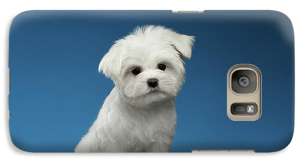 Cute Pure White Maltese Puppy Standing And Curiously Looking In Camera Isolated On Blue Background Galaxy S7 Case by Sergey Taran