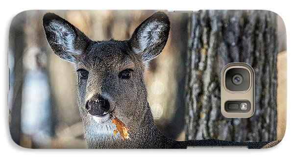 Galaxy Case featuring the photograph Deer At The Salad Bar by Paul Freidlund