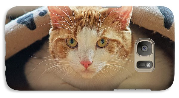 Galaxy Case featuring the photograph Delectable Companion.. by Nina Stavlund