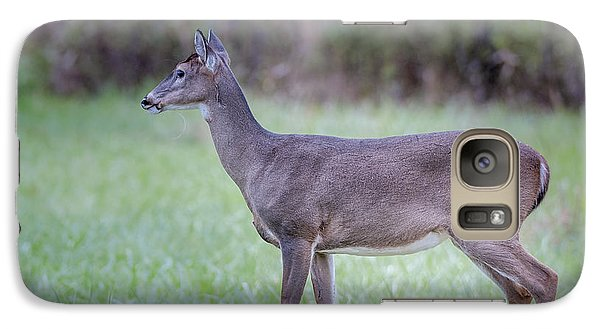 Galaxy Case featuring the photograph Doe In Cades Cove by Tyson Smith