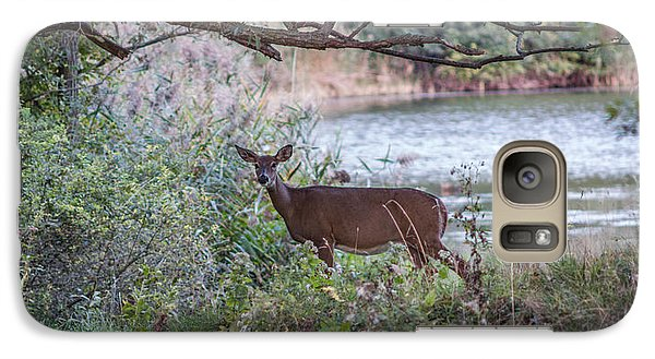 Galaxy Case featuring the photograph Doe Under Arching Branches by Chris Bordeleau