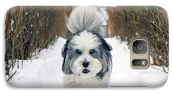 Galaxy Case featuring the photograph Doing The Dog Walk by Keith Armstrong